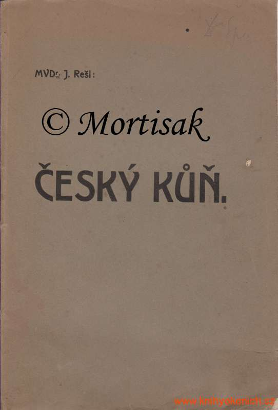 Český-kůň.jpg